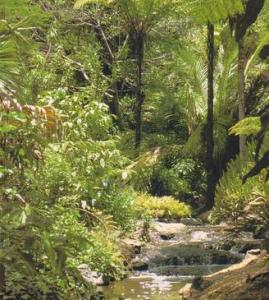 rainforest gardens